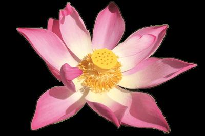 Soul Sisters Onlinekongress - Lotus Paket