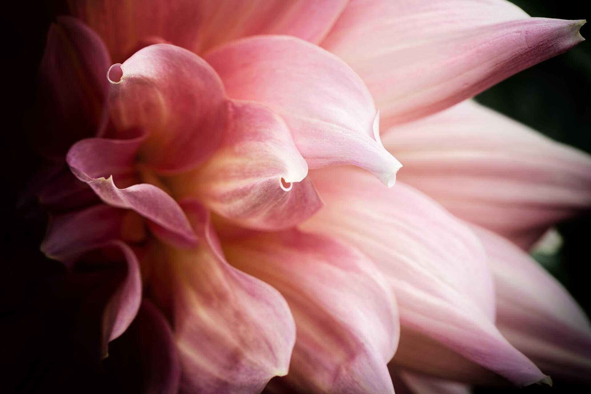 flower-1786499_1920