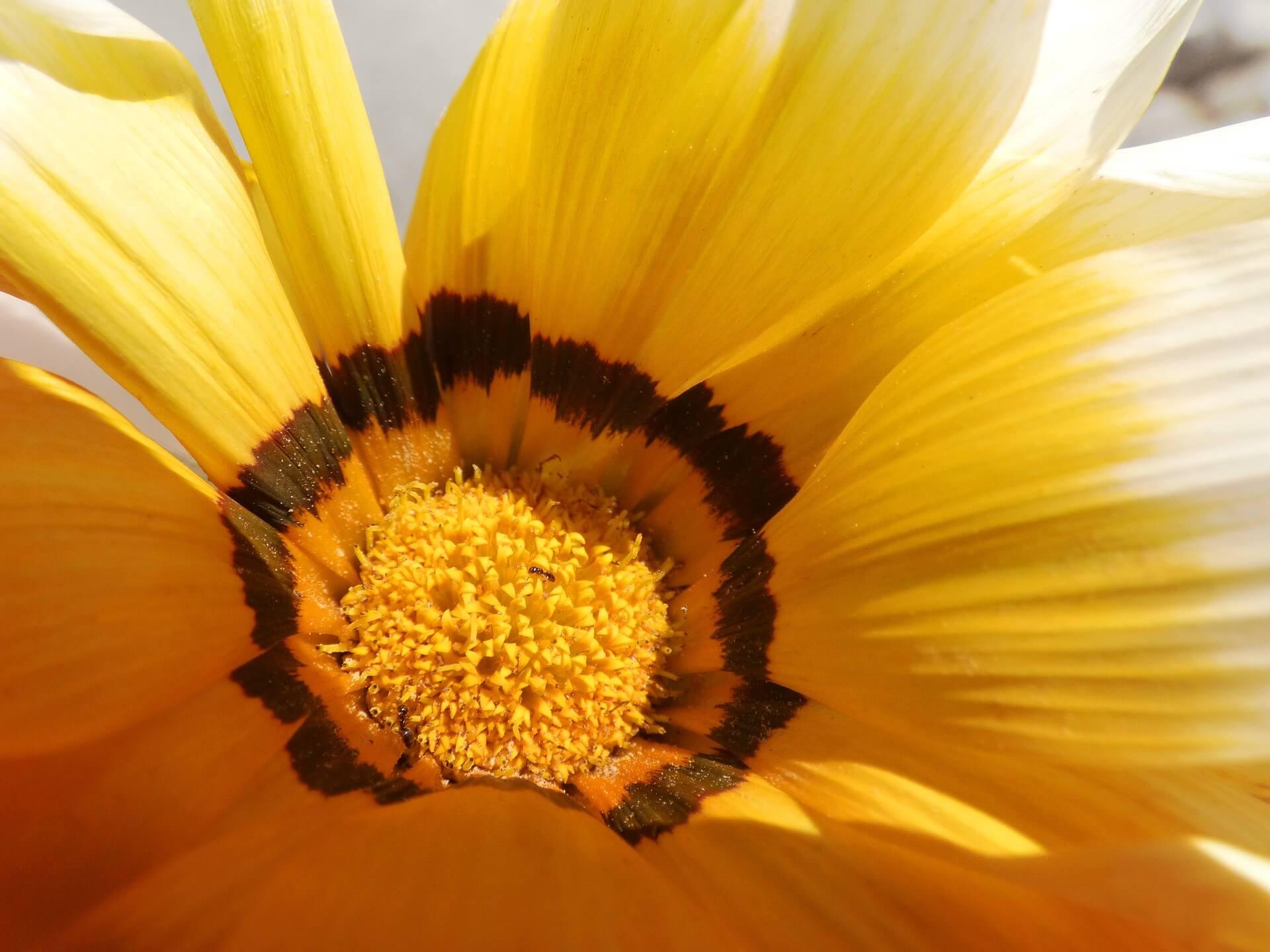 flower-2088855_1920