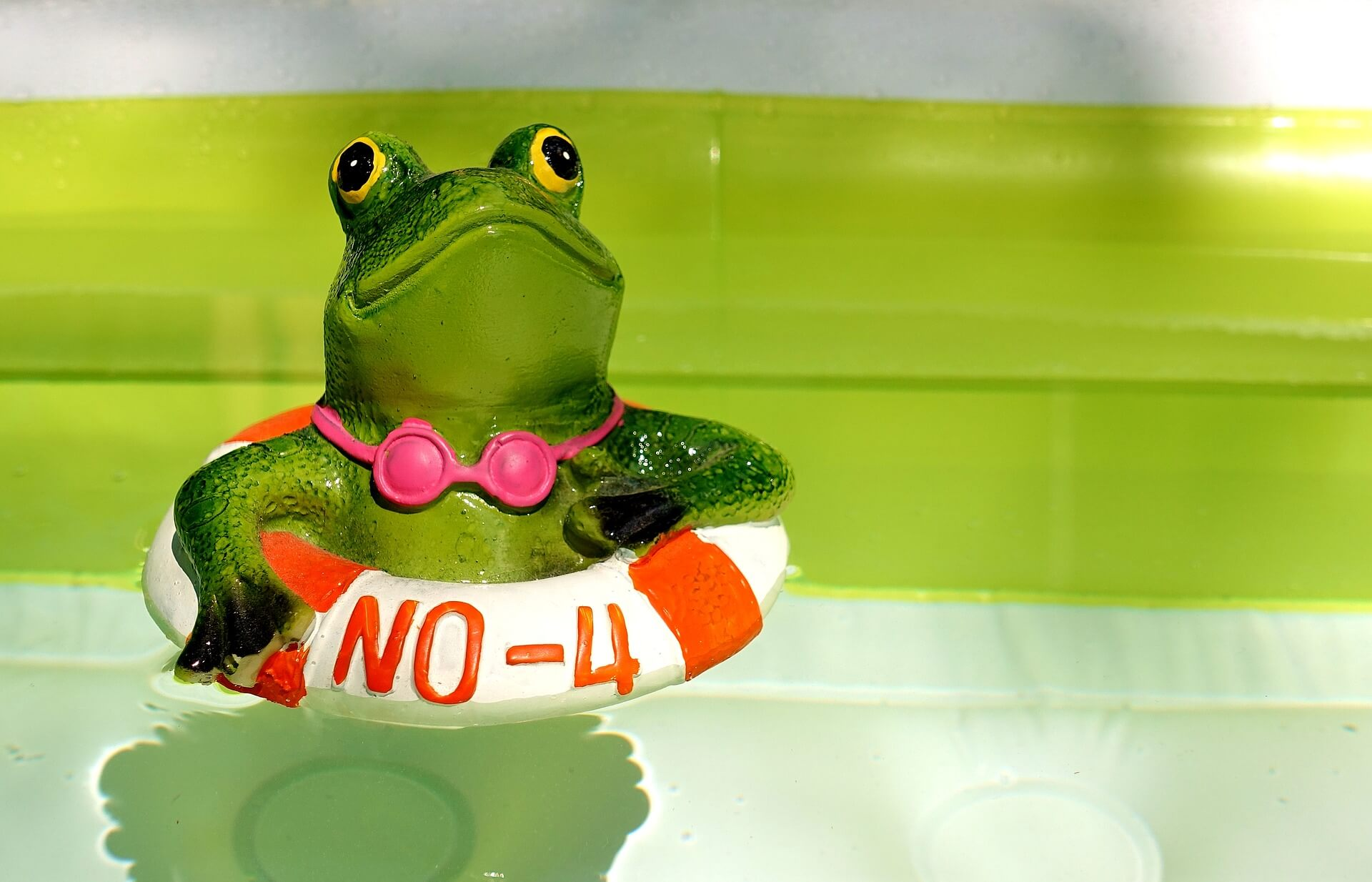 frog-3541851_1920